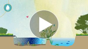 exemple-motion-design-sensibilisation-biodiversité-observatoire-regional-biodiversite-videostorytelling